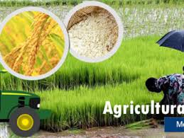 Top 3 Agricultural Grants/Loan In Nigeria 2018